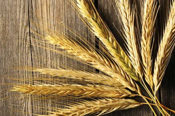 O centeio é outro cereal com muitas fibras, que prolonga a sensação de saciedade. Geralmente, é encontrado misturado a outros cereais e é fonte de proteína, que fornecem energia para o corpo. A quantidade a ser ingerida pode ser maior do que as oleaginosas, cerca de duas colheres de sopa por dia. Para quem tem a doença celíaca, é proibido pois contem glúten.