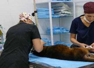 Para o prefeito Rogério Lins, essas mudanças são necessárias, pois além de ajudar no diagnóstico do paciente veterinário, também auxiliará o médico veterinário em seu trabalho.