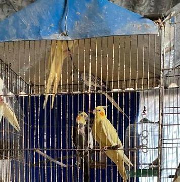 Homem é preso em Osasco e resgata mais de 40 animais maltratados