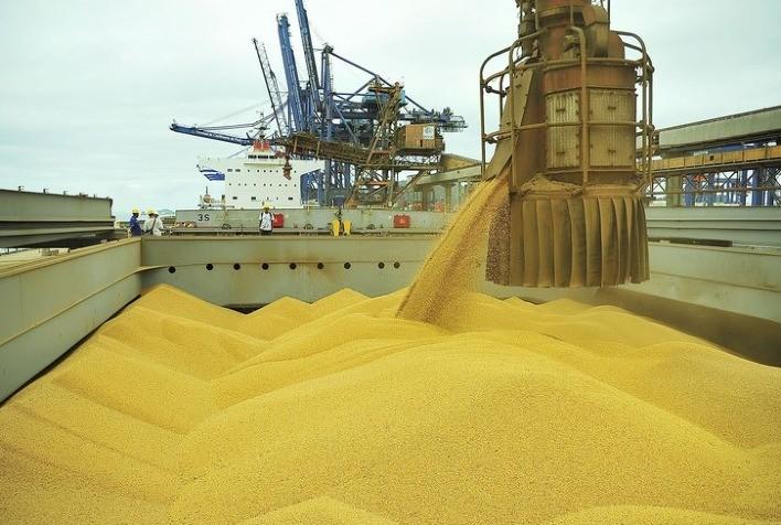 Despenca exportação de milho brasileiro