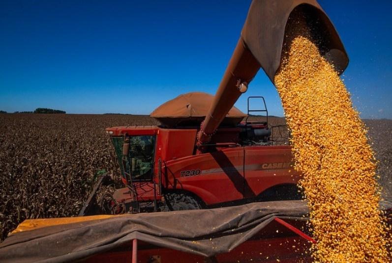 Avanço da colheita da segunda safra e queda nas cotações do milho