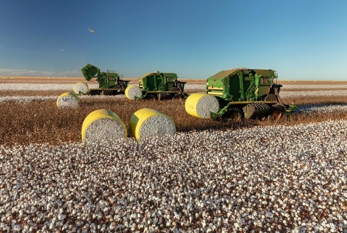 Colheita de algodão no Brasil atinge 97% da área, estima Abrapa