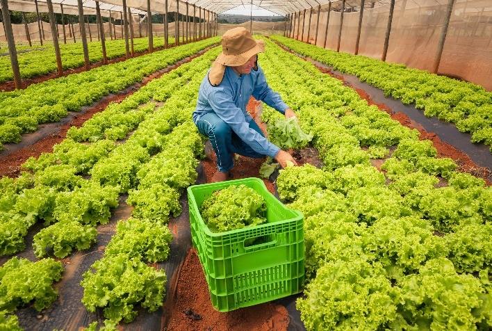 Produção de alimentos em 2021 criou 92% mais novos postos de trabalho que 2020