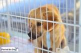 Outro cão esperando para ser adotado.