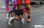 sp-dog-run-11