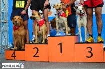 sp-dog-run-123