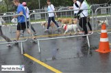 sp-dog-run-41