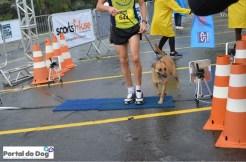 sp-dog-run-44