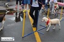 sp-dog-run-75
