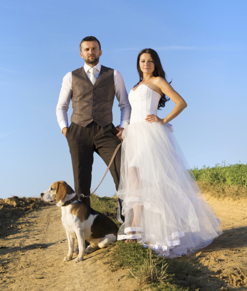 cachorros-casamentos-14