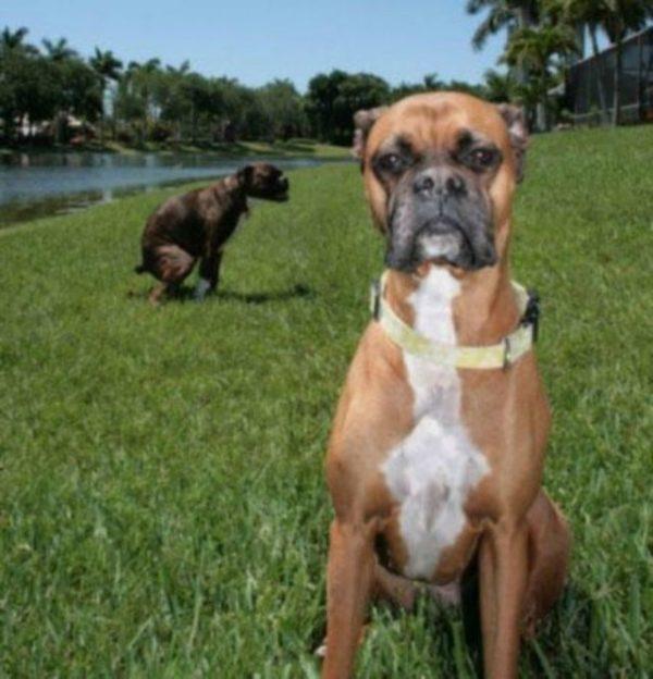 foto-cachorro-coco-10