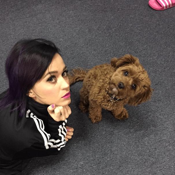Katy Perry com seu cão Butters. (Foto: Reprodução / Instagram)