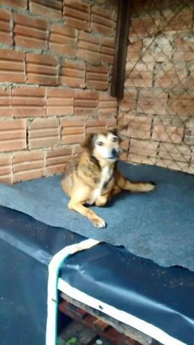 Cão em local protegido contra o alagamento. (Foto: Reprodução / Facebook)