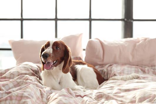 cães que dormem no quarto com tutores