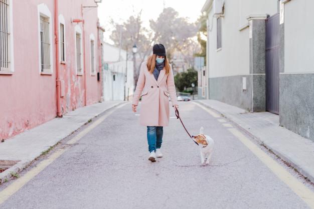 Cão em Quarentena