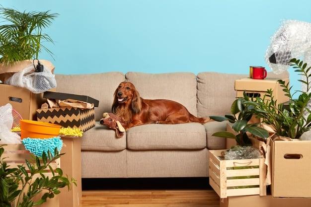 raças de cachorro de apartamento