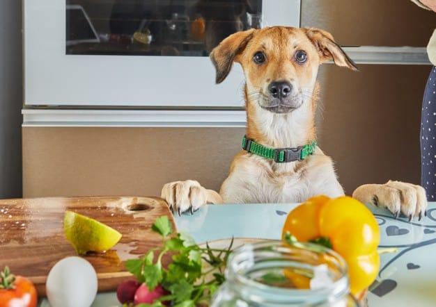cachorro pode comer salada