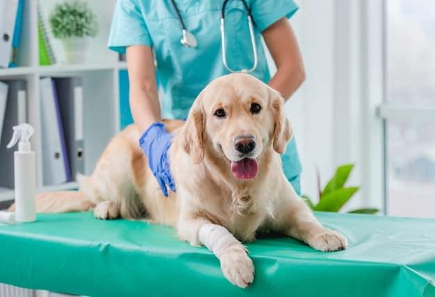 problemas ortopédicos em cães