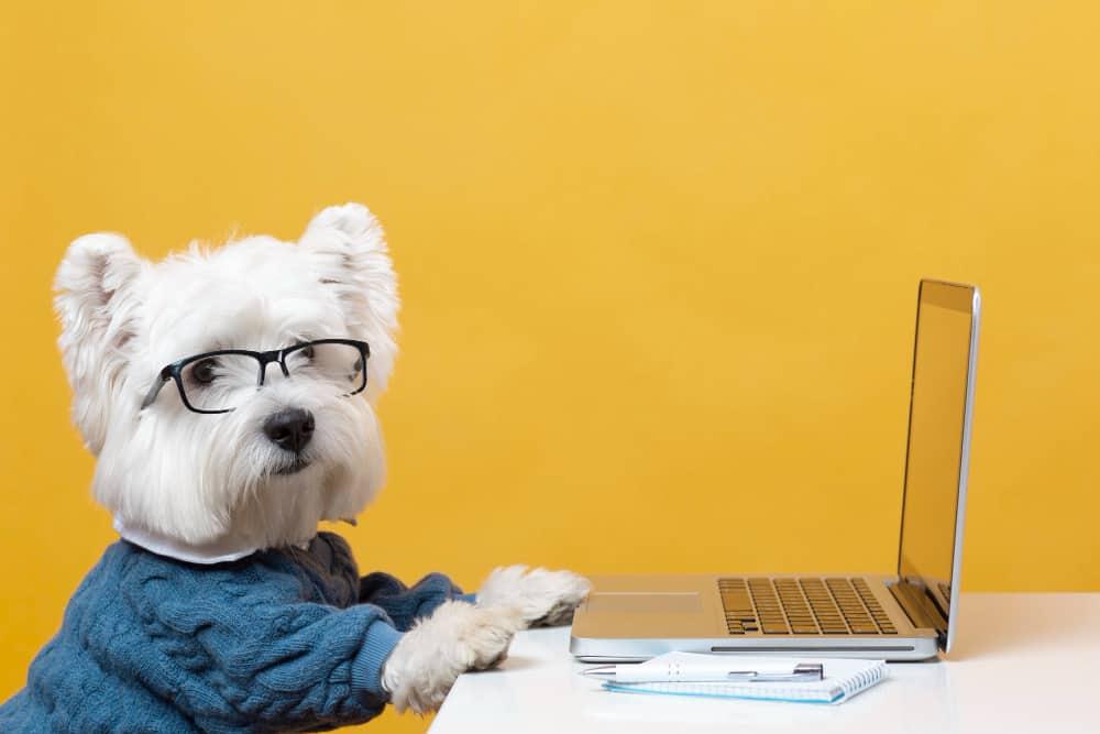 cachorro no computador