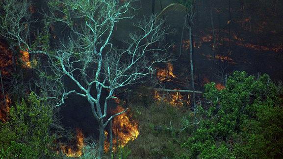 Grandes investidores institucionais pedem ao Brasil a proteção da Amazônia