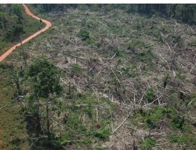 Seco, desmatado e queimado: em outubro, Acre tem novo recorde em perda de cobertura florestal