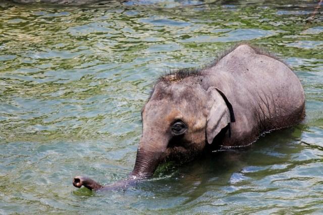 riserva degli elefanti indiani