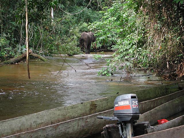 Parco Odzala in Congo