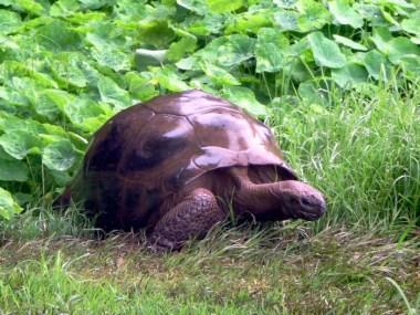 tartaruga più vecchia del mondo