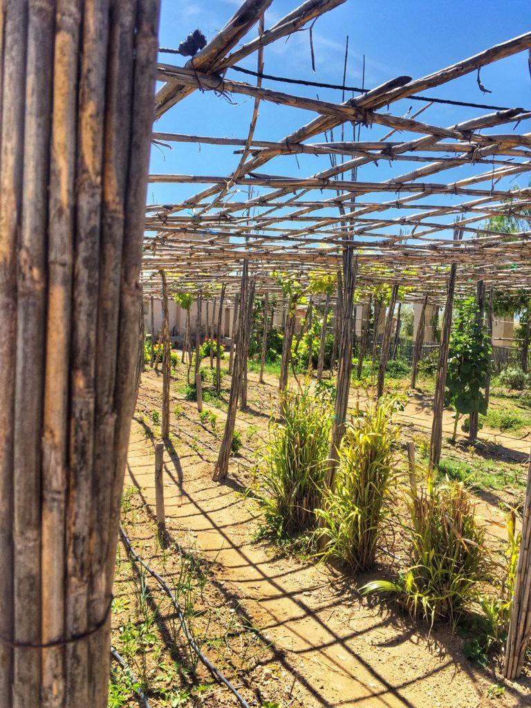 oasi nel deserto agafay