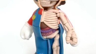 Photo of Mario Anatomia: Uma pequena visão de dentro do encanador da Nintendo! [PicArt]