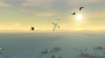 Storm Boy Game ibis-2