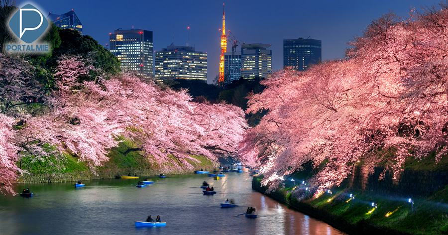 &nbspChidorigafuchi: beautiful scenery of cherry blossoms