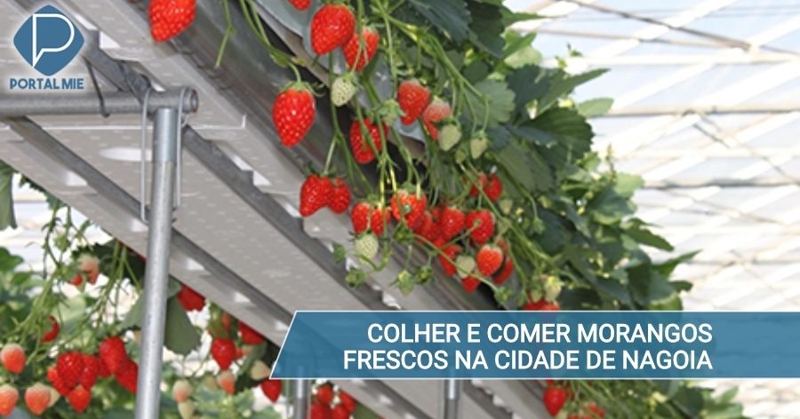 &nbspStrawberries to pick and eat on site, inside the city of Nagoya