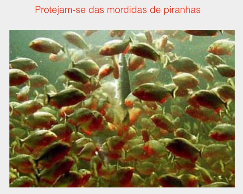 mordida das piranhas