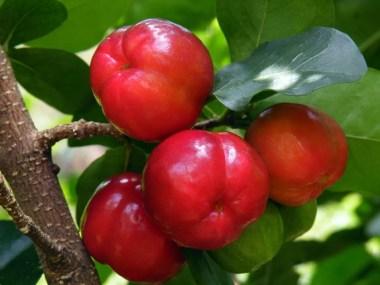 Acerola: Benefícios e vitaminas