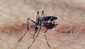 CTNBio autoriza terceira fase de testes da vacina contra dengue
