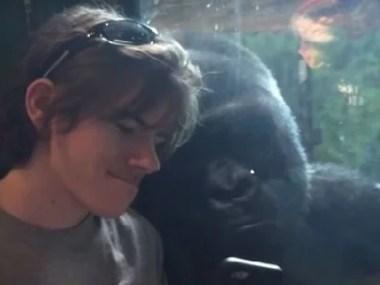 Gorila curioso rouba cena no Youtube