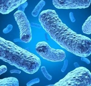 "Seres humanos tem ""aura de micróbios"""