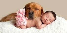 Animais podem imunizar crianças contra alergias