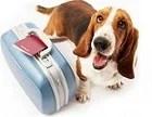 Viagens com Pets