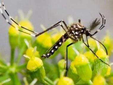 Cingapura confirma transmissão do Zika