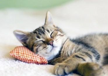 Como proteger os gatos?