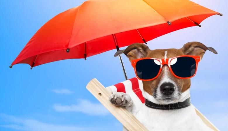Como cuidar do pet no verão?