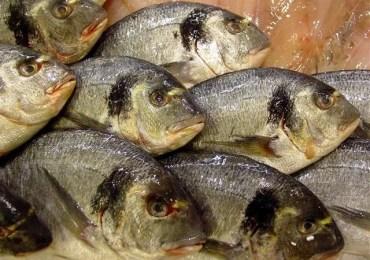 Doença misteriosa foi causada por ingestão de peixe