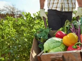 Agricultura orgânica e os benefícios para a saúde