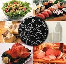 Conservação e contaminação dos alimentos