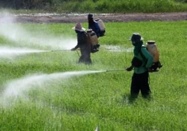 Agrotóxicos X Saúde Humana