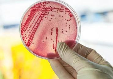 Ministério da Saúde, em busca de solução para combater resistência aos antimicrobianos