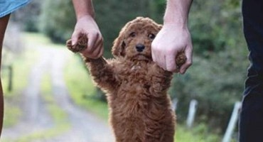 Animal de estimação:guarda compartilhada