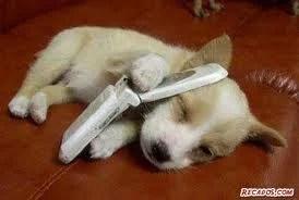 Pets: o que o seu cão quer lhe dizer?